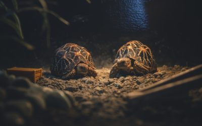 The significance of the Tortoise in Feng shui